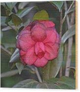 Alabama's Camelia Wood Print