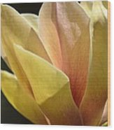 Alabama's Tulip Magnolia Wood Print