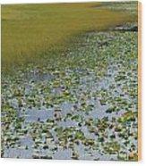 Alaska - Lily Pond And Marshy Meadow Wood Print