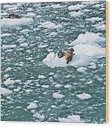 Alaska Seals Wood Print