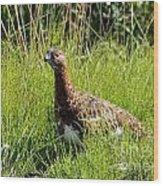 Alaska State Bird Willow Ptarmigan Wood Print