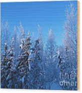 Alaska Sunrise Illuminating Spruce Trees Among Birches Wood Print
