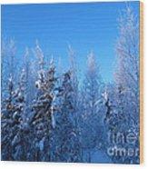 Alaska Sunrise Illuminating Spruce Trees Among Birches Wood Print by Elizabeth Stedman