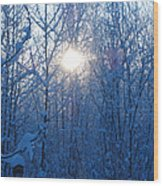 Alaska Sunrise Illuminating Through Birches And Willows Wood Print
