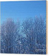 Alaska Sunrise Lighting Willows In Winter Wood Print