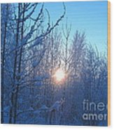 Alaska Sunrise Shining Through Birches And Willows Wood Print