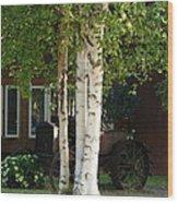 Alaskan Birch Wood Print