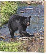 Alaskan Black Bear Hunting In A River Wood Print