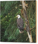 Alaskan Eagle Wood Print