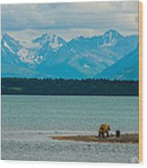 Alaskan Grizzly And Spring Cub Wood Print