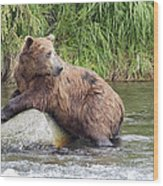 Alaskan Grizzly Wood Print