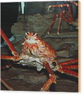 Alaskan King Crab 5d24125 Wood Print by Wingsdomain Art and Photography