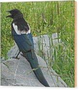 Alaskan Magpie Wood Print
