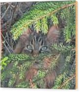 Alaskan Wild Cat Wood Print