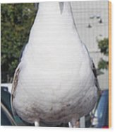 Albatross Wood Print