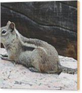 Albert Squirrel Wood Print