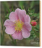 Alberta's Wild Rose Wood Print