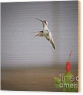 Albino Hummingbird Wood Print