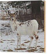 Albright The Piebald Deer Wood Print