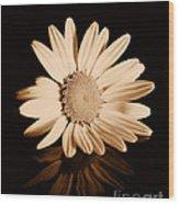 Albumen Daisy Wood Print