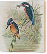 Alcedo Ispida Plate From The Birds Of Great Britain By John Gould Wood Print