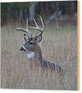 Alert Buck Wood Print