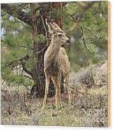 Alert In The Rockies Wood Print
