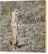 Alert Yellow Mongoose Wood Print