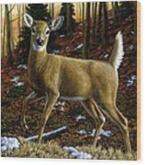 Whitetail Deer - Alerted Wood Print by Crista Forest