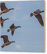 Aleutian Geese Wood Print
