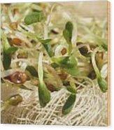 Alfalfa Sprouts Wood Print