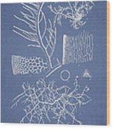Algae Wood Print by Aged Pixel