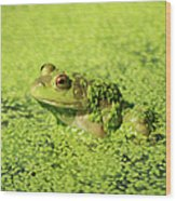 Algae Covered Frog Wood Print