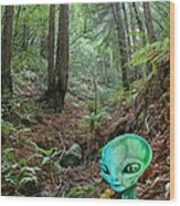 Alien In Redwood Forest Wood Print