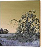 Alien Landscape 2 Wood Print