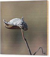 Alien Seed Pod? Wood Print