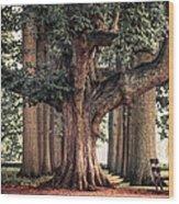 Alive Guardian. Park Of The De Haar Castle Wood Print