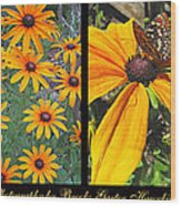 All About Black-eyed Susans Wood Print