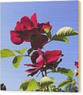 All About Roses And Blue Skies Iv Wood Print