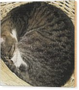 All Curled Up Wood Print
