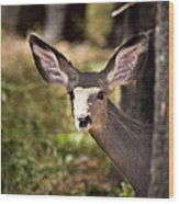 All Ears - Mule Deer Fawn - Casper Mountain - Casper Wyoming Wood Print
