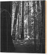 All Is Quiet Wood Print