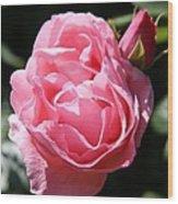 All Shades Of Pink Wood Print