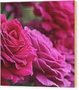 All The Fuchsia Pink Roses  Wood Print
