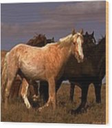 All The Pretty Horses  Wood Print by Jeanne  Bencich-Nations