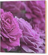 All The Violet Roses Wood Print