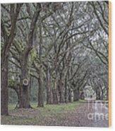 Allee Of Oak Tree's Wood Print