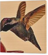 Allen Hummingbird In Flight At Feeder Wood Print