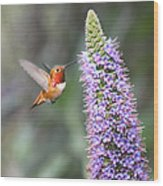 Allen Hummingbird On Flower Wood Print