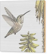 Allen's Hummingbird And Aloe Wood Print